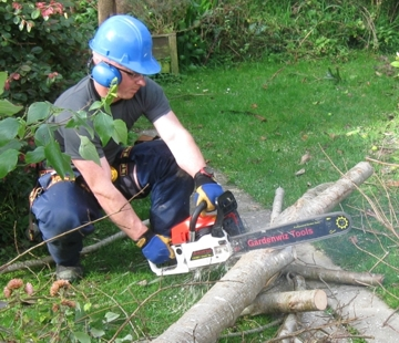 Image of person using the CS-5801 to tidy up after felling an unwanted tree